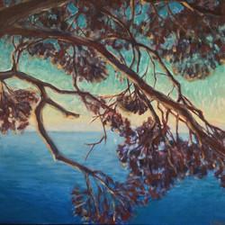 """""""Les branches du pin"""""""