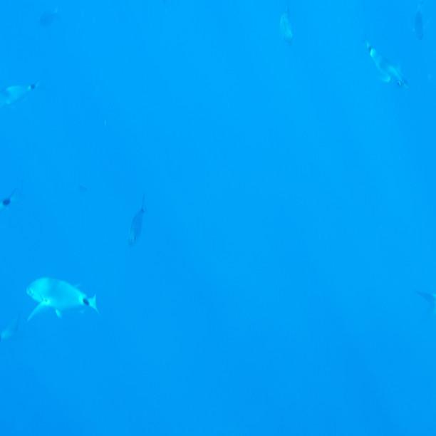 poissons île d'Elbe