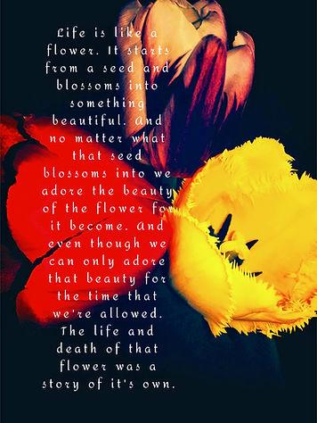 A flower (2).jpg
