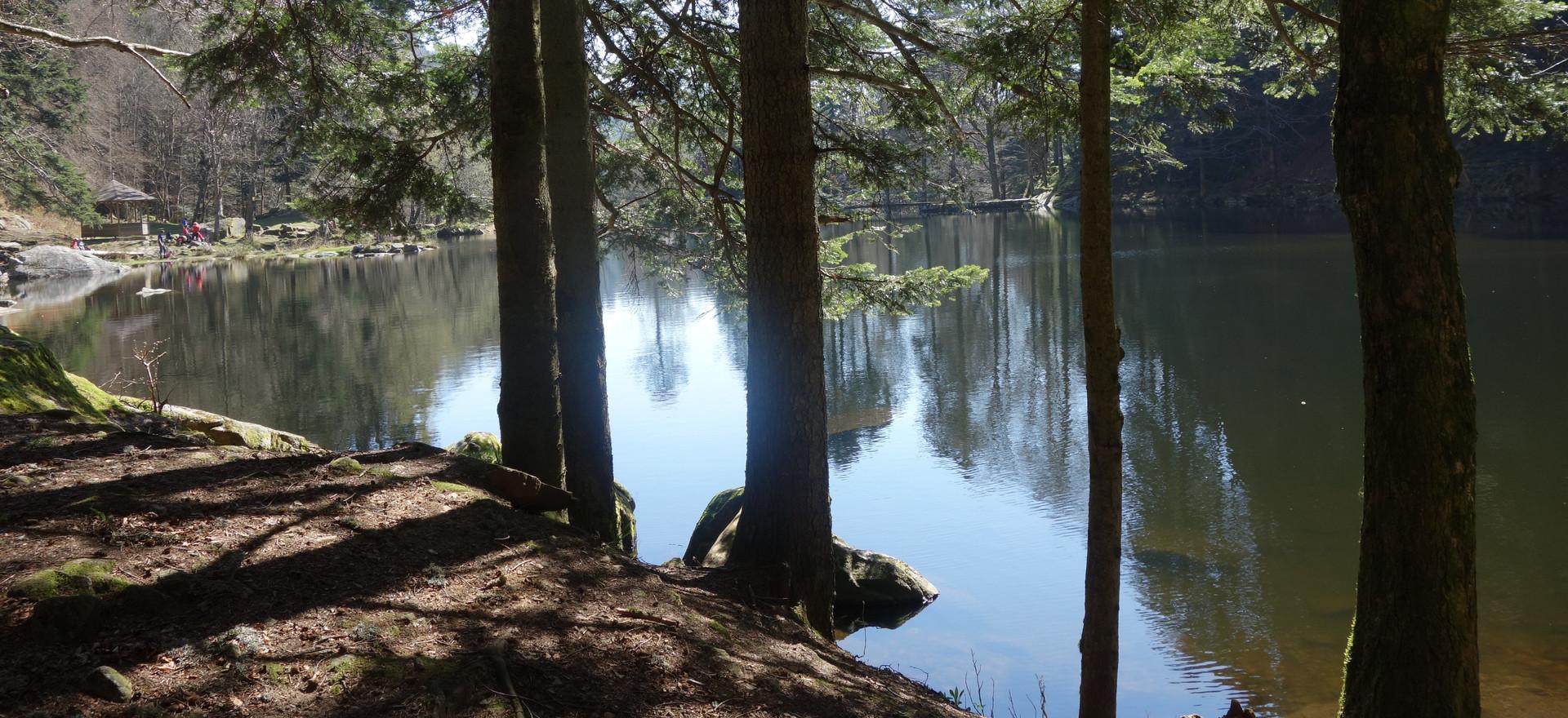 Les forêts Alsaciennes