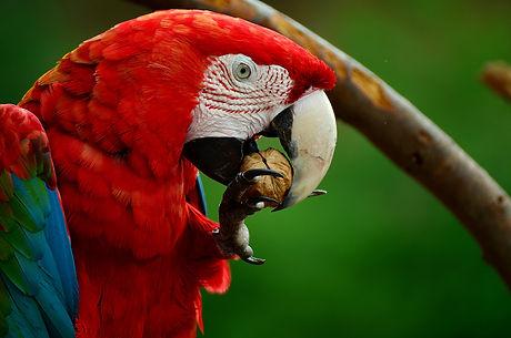 JW Amazon Tour - Macaw Tour Banner.jpg
