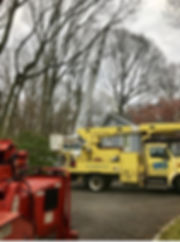 Tree Removals with Crane