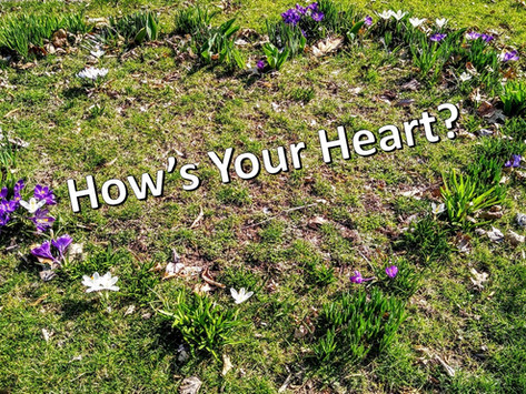 How's Your Heart?