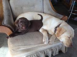 Franny & Bella
