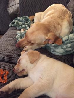 Baby Cooper & Stella