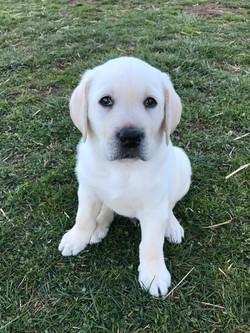 Baby Benny!