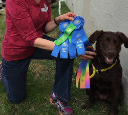 Coriander - 1st Place Agility Trial