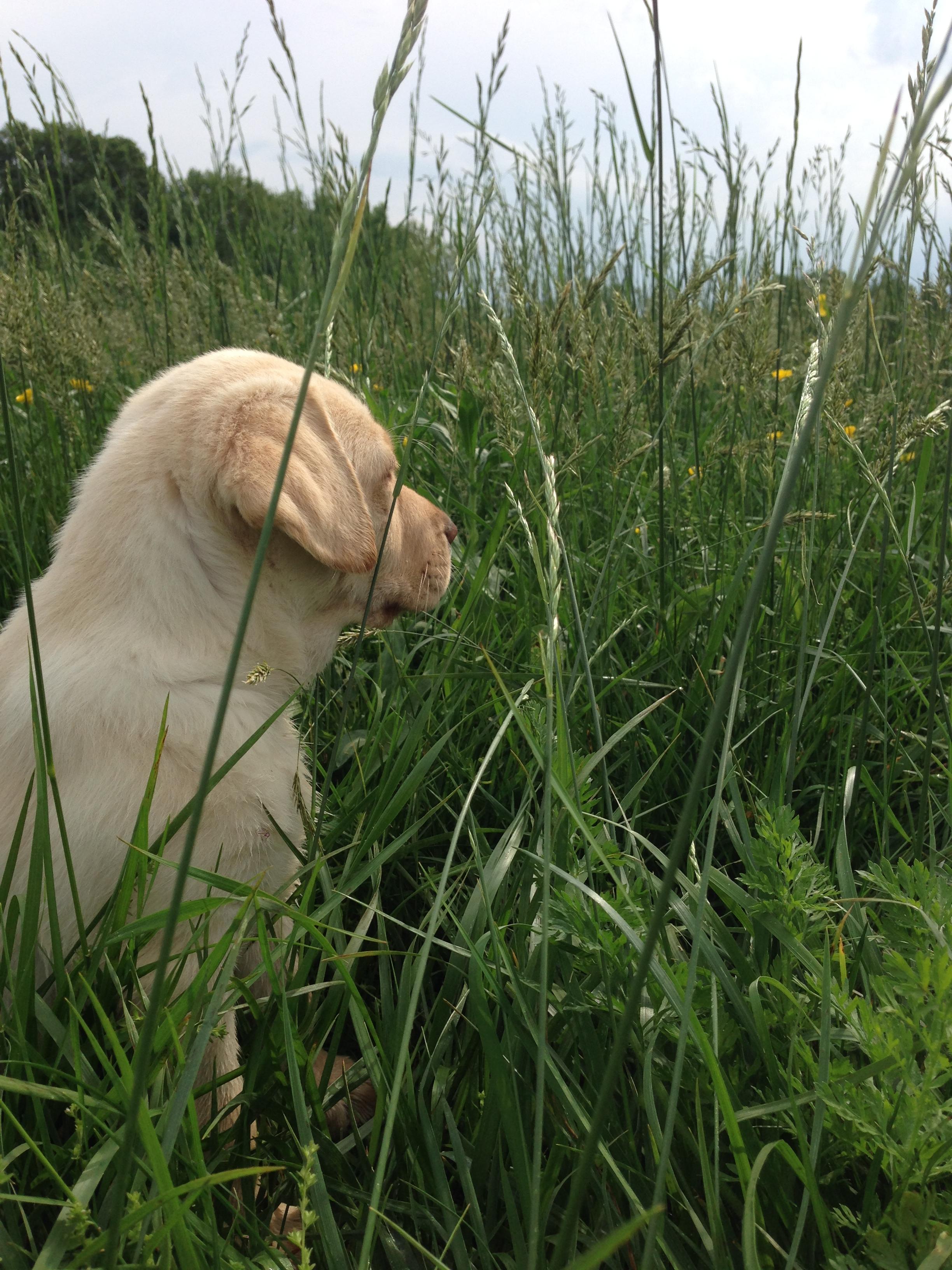 """Belly"" Bella Rose of Hillside Farms"