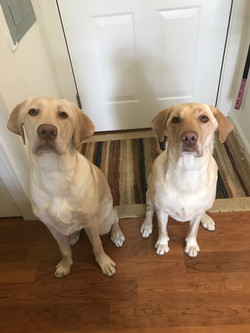Bella's Pups