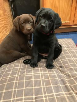 Baby Coco & Tally