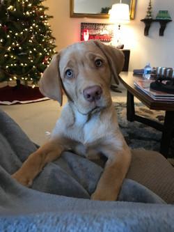 Tucker - 12 weeks