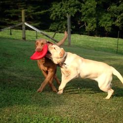 Bella & Lilly Summer 2014