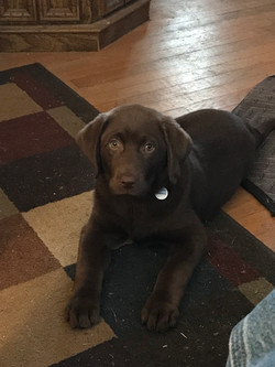 Baby Coco