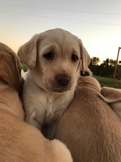 Baby Luna - 6 weeks