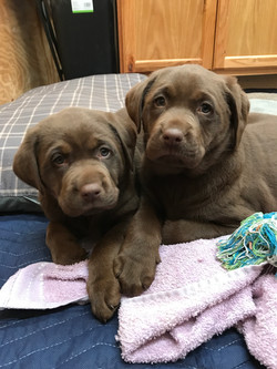 Baby Coco & Baby Coco Grace