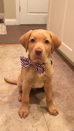 Baby Brody - December 2015
