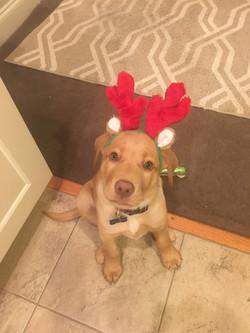 Baby Brody - Christmas 2015