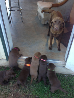 Abby & babies 4.5 weeks