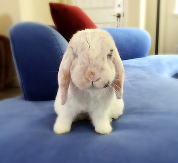 PuppyCat's attitude on couch
