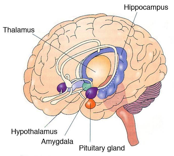 Limbični sistem