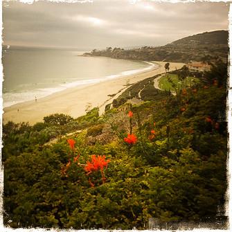 A Laguna Beach view-1.jpg