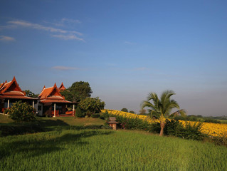 Take a Room in the midst of Thailand's Rice Fields