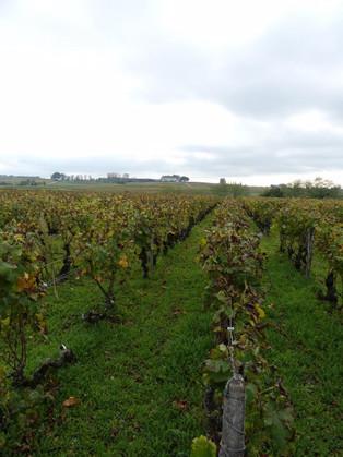 The vineyards of Bordeaux!