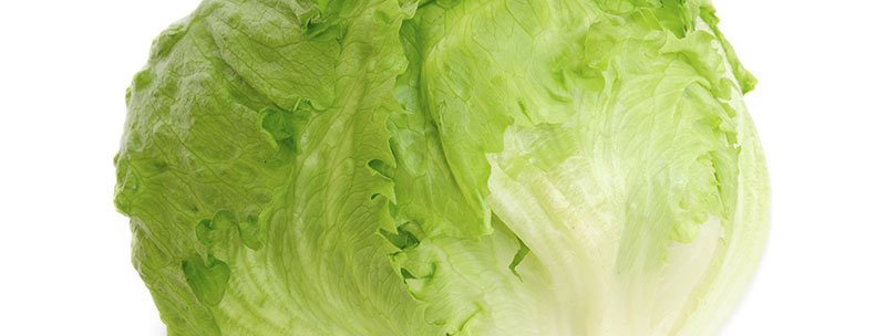 Lettuce Ice Burg