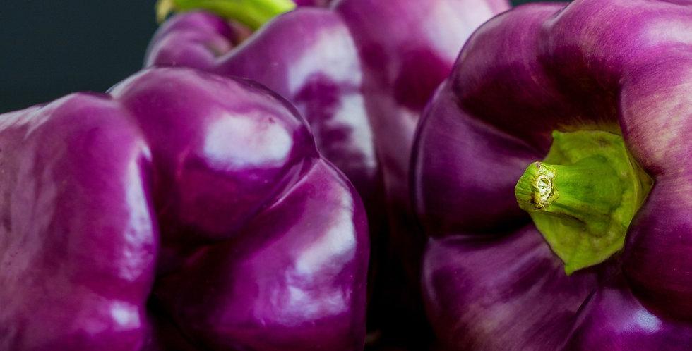 Capsicum Purple