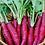 Thumbnail: Radish Red Long