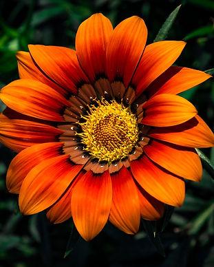FlowerSeeds_home.jpg