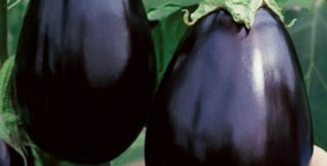 Brinjal Black Beauty