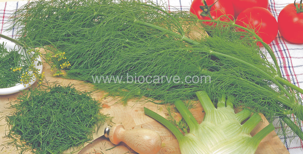 Herb Fennel Florence