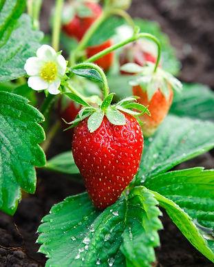 biocarve_herbs_edited.jpg