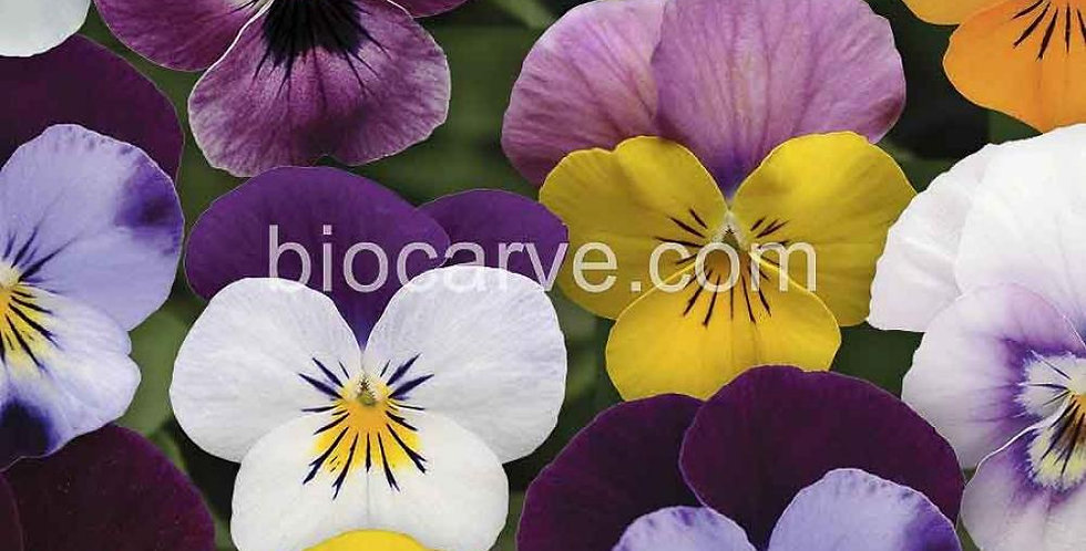 Pansy F1 Mixed Hybrid
