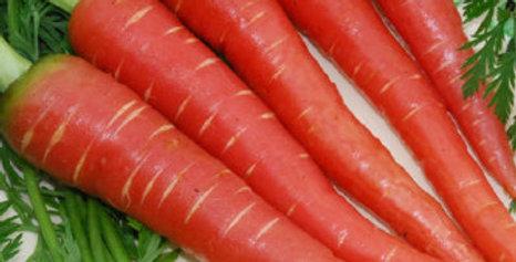 Carrot Red Long