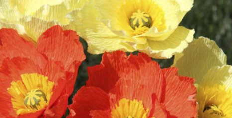 Iceland Poppy Mix (Papaver nudicaule) NM