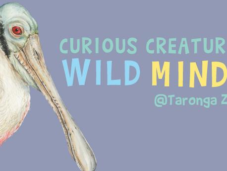 Curious Creatures, Wild Minds at Taronga Zoo