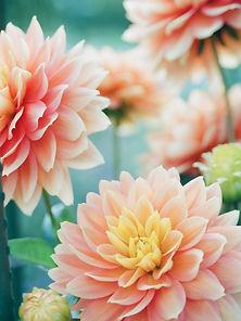 peach flowers.jpg