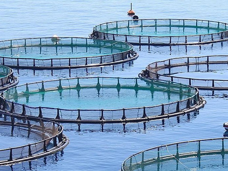 Farmed Fish: To Eat or Not To Eat?