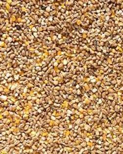 Poultry corn.jpg