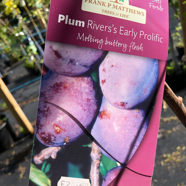 Plum Rivers's Early Prolific £29.50