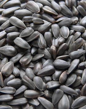 black sunflower seeds.jpg