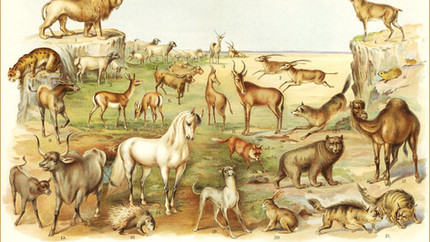 African animals in the Bible?