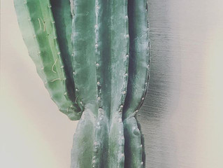 New Cacti for the New Year
