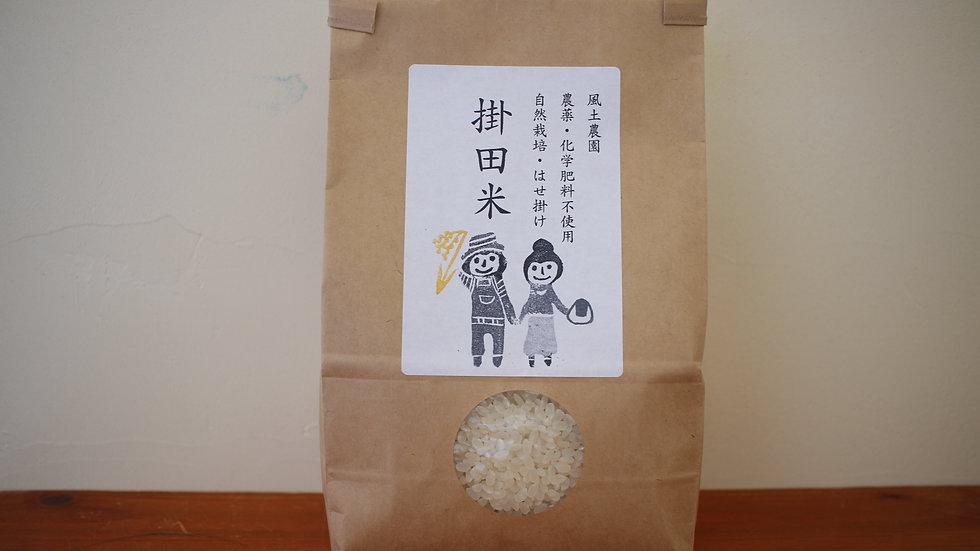 掛田米 ササシグレ