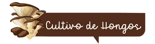 clases consulta on line-04.png