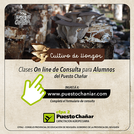clases consulta on line-03.png