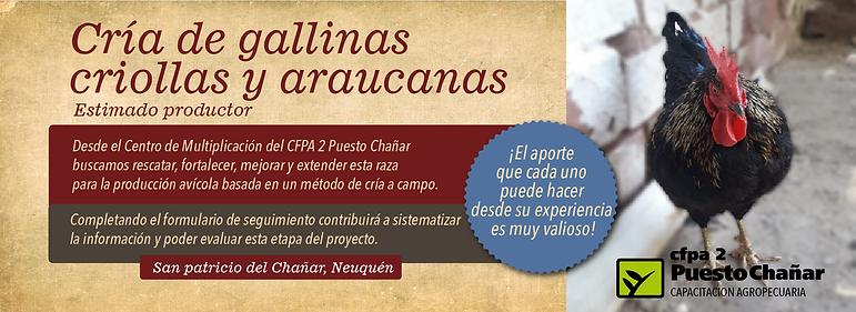 PUBLICACION PRODUCTORES GALLINA CRIOLLA-