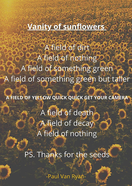 vanity of sunflowers A field of nothing